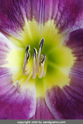 flowers under the microscope microscopic flower photography art photo microscopy artwork