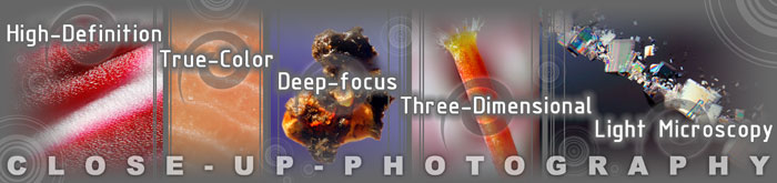 High-Definition, True-Color, Deep-focus, Three-Dimensional Light Microscopy Services